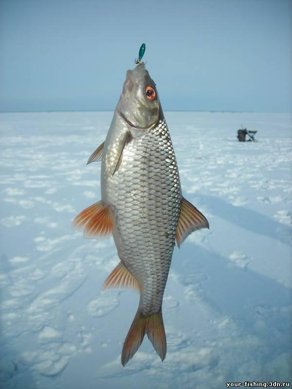 рыбалка на что клюет чебак